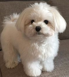 Really Cute Puppies, Cute Dogs And Puppies, Baby Puppies, Baby Dogs, Doggies, Cute Funny Animals, Cute Baby Animals, Animals And Pets, Cute Dogs Breeds