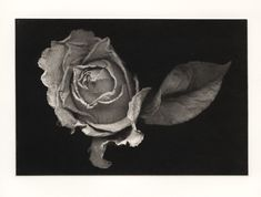 Jon Lybrook of Intaglio Editions shares his procedure for creating more photographic polymer photogravure plates and prints. Intaglio Printmaking, Ansel Adams, Love Flowers, Black And White, Artist, Prints, Photography, Dark Side, Articles
