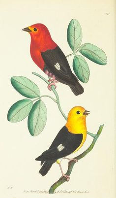 v.7 - The naturalist's miscellany, or Coloured figures of natural objects - Biodiversity Heritage Library