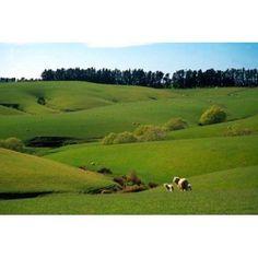 Farmland Near Clinton New Zealand Canvas Art - David Wall DanitaDelimont (36 x 24)
