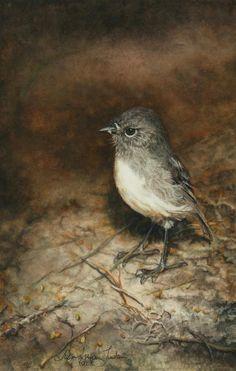 'Stewart Island Robin'