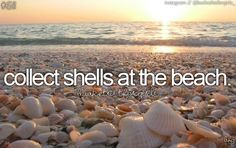 *****with Gordon****Collected shells of Florida beach
