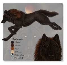 A little reference sheet for my main character/persona/fursona, etc. She can be wolf, werewolf/anthro, or occasionally human Character & artwo. Beautiful Wolves, Beautiful Artwork, Be Wolf, Anime Wolf Drawing, Demon Wolf, Face Pictures, Warrior Cats, Mythology, Creatures