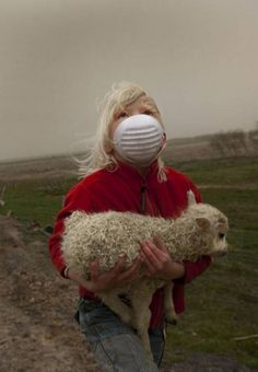 Little girl is saving a lamb from the volcano Eyjafjallajökull, Iceland