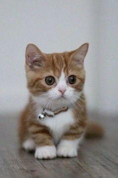 #cats #kittens #kitties
