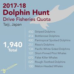 I am challenging myself to make a small graphic/infographic/doodle every single day during the month of September. Since September 1 is the first day of the annual dolphin slaughter, I decided to share this season quota. Every dolphin lost is a tragedy, this must end. ... September 1 marks the first day of the annual dolphin hunts in Taiji, Japan. During these hunts fisherman in boats drive the dolphins into a cove where the 'prettiest' ones will be sold to trainers and be used in aquariums…