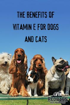 Can You Give Vitamin E To Dogs