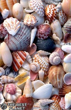 The title is Sanibel sea shells! Love it!