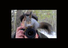 Animales y cámaras fotográficas captados en la naturaleza