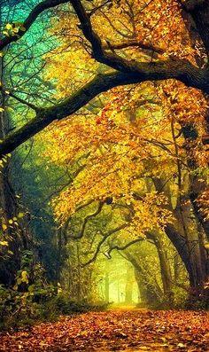 Autunno Gorgeous di We Heart - http://weheartit.com/entry/50060930/via/alisa_murashckina