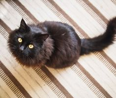 Old age affects cats in many ways. Dr. Marty Becker explains some common older cat ailments and how they can be treated.