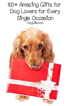 """Looking for the best gifts for dog lovers for every single occasion? From birthdays to Christmas to """"just because,"""" we've got you covered!"""