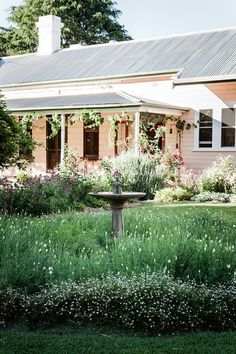 I love this typical old Australian homestead surrounded by a rambling country garden ... you see a lot of farmhouses/gardens like this in rural Australia.photos by michael wee for country style au'Clair Matin' shrub rose xx debravia homelife