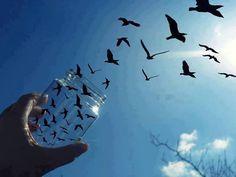 jar of birds