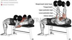 Hammer-grip dumbbell bench press exercise