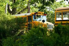 School bus School Buses, School Bus Driver, Future School, Wheels On The Bus, Little Cabin, Day Work, Cabins In The Woods, Aesthetic Grunge, School District