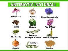 Antibiotico naturale: il regalo biologico da scoprire