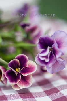 Love these pansies on the purple gingham tablecloth!