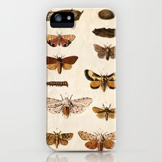 Vintage Science Plate Poster. Insects. Butterflies Moths.- by Curious Prints iPhone Case
