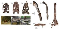 "The ""mega-wetland"" of north-eastern Peru was home to at least seven different types of prehistoric crocodile."