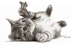 The Secrets Of Drawing Realistic Pencil Portraits - CHATS Secrets Of Drawing Realistic Pencil Portraits - Discover The Secrets Of Drawing Realistic Pencil Portraits Animal Sketches, Animal Drawings, Art Sketches, Drawing Animals, Kitty Tattoos, Cat Tattoo, Tattoo Art, Kitten Drawing, Animal Art Projects