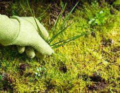 """Moos, Disteln, Löwenzahn - all das sind """"ungewollte Pflanzen"""", also Unkraut. So sind Sie erfolgreich bei der Unkrautbeseitigung."""