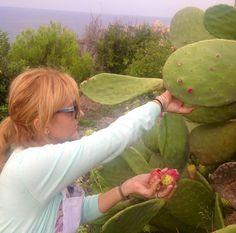 healthy fruit tart recipes cactus fruit