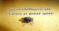 DIY: Πώς να απαλλαγείτε από τις μύγες με φυσικό τρόπο γρήγορα μέσα και έξω!