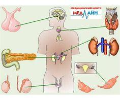 Эндокринолог  Сфера деятельности эндокринолога сосредоточена в области диагностирования, лечения и профилактики ряда заболеваний, которые могут быть актуальными для эндокринной системы. В вопросе о том, что делает эндокринолог, можно выделить, что он определяет наиболее оптимальные решения, касающиеся гормональной регуляции в организме в каждом конкретном случае, а также меры по устранению любых нарушений, связанных данной функцией.  Вдаваясь в более детальное рассмотрение функций…