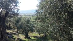 A view from the top #evo3oliveoil #lesvos #extravirgin #organic #harvest #whatsmyjourney #oliveoil #greece #foodie