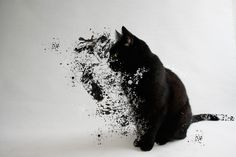In this project, I used an effect called dispersion to make this black cat seem like it's becoming water. This was a recreation of one of my classmates' presentations. I used this tutorial http://wegraphics.net/blog/tutorials/how-to-create-an-easy-dispersion-effect-in-photoshop/ to make this photo. I downloaded a paint splatter brush, and worked with layer masks. I also liquified the splatters, but I don't really like how the top part turned out.