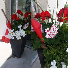 canada 150 flowers
