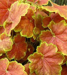 130 Best Ornamental Plants images Plants Ornamental plants Planting flowers
