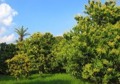 کس علاقے کے لیے کون سے درخت موزوں ہیں