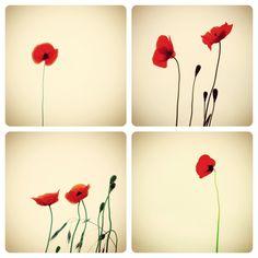Poppys.