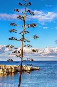 Protaras resort, Paralimni Municipality, Cyprus