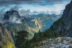 Aliexpress.com : Buy Washington state trees summer landscape ...
