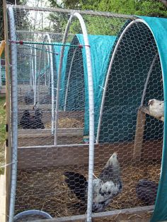 "We use the same concept on a 4x6 base. All but the front covered with 1"" chicken wire. 2x4 roost in back and back half covered with a tarp--- so half open/half covered. Front is a 4x4 piece of plywood in a groove at the bottom and held tight w/ bungie cords at the top. Usualy work trios but can handlle half a dozen."