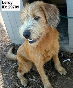 SPONSOR ME dollars will not go to Fluffy Dog Rescue or the dog shown.For more information on Fluffy Dog Rescue and Adopting go to our site, www.fluffydog.net.Our listings are updated constantly, if there is an applicant, it will say PENDING ADOPTION...