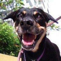 DIY multipurpose dog spray - calm, deodorise, repel fleas, mosquitoes!