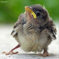 Nature Animals, Animals And Pets, Baby Animals, Cute Animals, Little Birds, Love Birds, Bird Pictures, Animal Pictures, Hope Is The Thing With Feathers