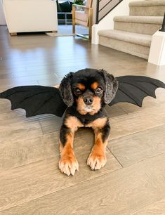 NO SEW DIY DRAGON DOG COSTUME   DAENERYS TARGARYEN   Just A Tina Bit Funny Animal Pictures, Cute Funny Animals, Daenerys Targaryen Costume Halloween, Felt Dragon, Stitch Witchery, Dragon Costume, Game Of Thrones Fans, Charlie Brown And Snoopy, Mother Of Dragons