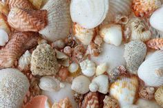 DIY for shell projects Seashell Necklace, Shell Necklaces, Craft Projects, Projects To Try, I Love The Beach, Seashell Crafts, Weird Things, Beach Babe, Outdoor Rooms