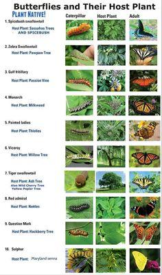 Butterfly Garden Plants, Garden Insects, Sassafras Tree, Hummingbird Garden, Small Garden Design, Garden Photos, Indoor Garden, Gardening Tips, Wallpaper
