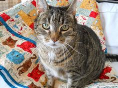 ❤ =^..^= ❤ Snug Harbor Quilts: Kitty Cat Love Quilt with Chester.