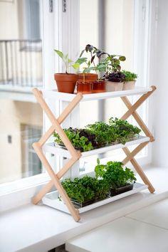 Fűszerkert a konyhában is part of Garden - Balcony Garden, Herb Garden, Indoor Garden, Indoor Plants, Home And Garden, Urban Kitchen, Plant Shelves, Garden Shelves, Growing Herbs