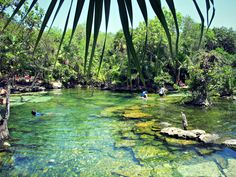 Discover Cenote Azul in the Puerto Aventuras in the Riviera Maya for one of the most beautiful cenotes outside Cancun and Playa del Carmen.