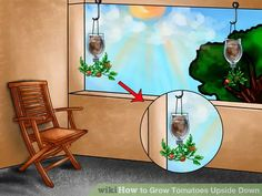 Image titled Grow Tomatoes Upside Down Step 7