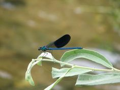 libelinha azul Nature Plants, Best Web, Planting Flowers, Blue
