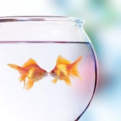 We're just two lost souls swimming in a fishbowl, year after year.